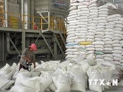 Riz : le Vietnam abaisse son objectif d'exportation pour 2014
