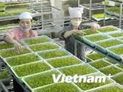 Tien Giang développe des zones de production de légumes aux normes VietGAP