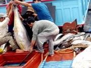 Pêche au thon : les pêcheurs de Binh Dinh reçoivent une aide japonaise