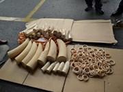 Saisie de 39 défenses d'éléphants à Ho Chi Minh-Ville