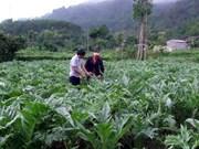 L'Irlande apprécie l'efficacité de l'emploi des aides à Ha Giang