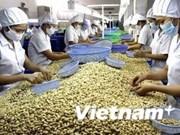 Dong Nai : hausse des exportations de noix de cajou