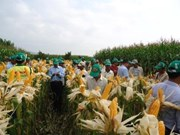 Bond des importations nationales de blé et de maïs