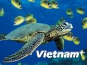 Kien Giang : cinq tortues marines relâchées en mer