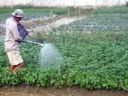 La mise aux normes VietGap porte ses fruits dans le Sud