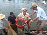 Le delta du Mékong exploite efficacement les avantages de l'aquaculture