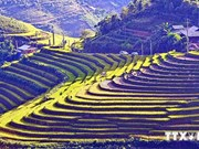 Les rizières en terrasses de Sapa parmi les plus beaux sites du monde