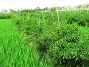 Ruralité: une formule qui fait mouche à Ninh Binh