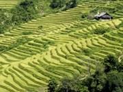 Ouverture de la Semaine des rizières en terrasses de Mu Cang Chai