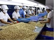 La noix de cajou du Vietnam exportée vers 80 pays et territoires