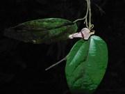 De nouvelles espèces végétales découvertes à Thanh Hoa