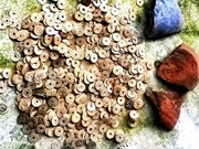Des monnaies anciennes découvertes à Ha Tinh