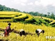 La VNA améliore l'efficacité des informations pour les régions Tay Bac, Tay Nguyen et Tay Nam Bo
