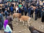 Hà Giang : découverte du marché forain aux boeufs de Meo Vac