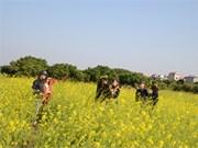 Contempler les fleurs à Hanoi