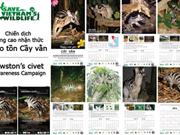 Protection de la civette palmiste d'Owston au Vietnam