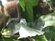 Plus de 7.300 milliards de dôngs pour un zoo à Ninh Binh