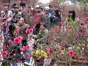Sur les sentiers des villages horticoles de Hanoi ce Têt