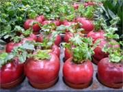 Têt : à la recherche de plantes d'agréments originales
