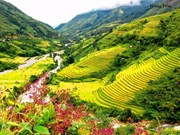 Muong Hoa, une vallée pittoresque à Sa Pa
