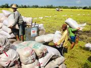 L'agriculture, pilier de l'économie du Vietnam en 2014