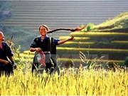Edifier des valeurs humaines et culturelles du Vietnam