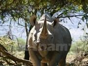 Agissons ensemble pour mettre fin au trafic des animaux sauvages