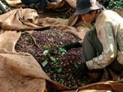 Conférence sur le développement durable du secteur du café du Vietnam