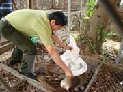 Quang Binh : huit animaux rares braconnés relâchés dans la nature