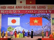 La Fête du cerisier du Japon 2015 début avril à Ha Long