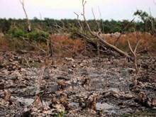 L'invasion d'eau salée menace des sites Ramsar au Vietnam