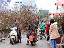 Le marché aux fleurs de Quang Ba