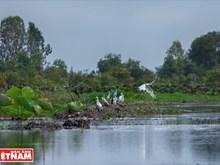 La Réserve de Lang Sen, 7e site Ramsar du Vietnam