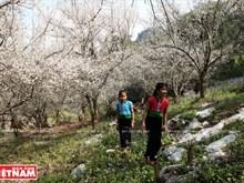 Moc Chau, vallée des fleurs