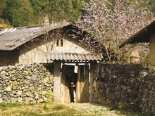 Floraison printannière sur le plateau de Dong Van