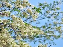 Hanoï: la beauté des fleurs du mois de mars
